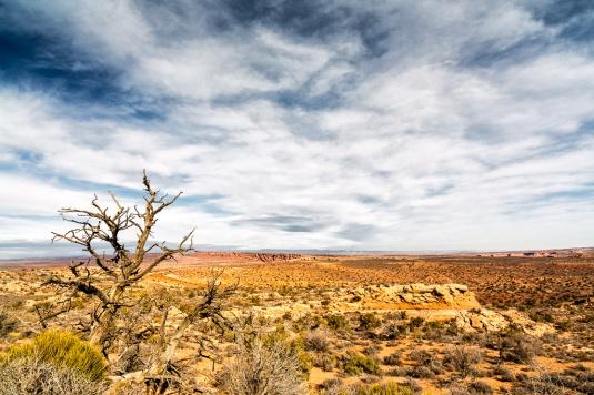 bare desert tree