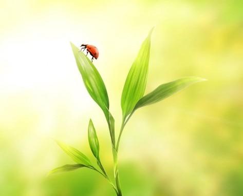 trezirea insectelor